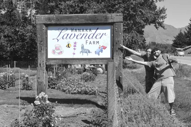 lavander-farm-sign-grisWEB